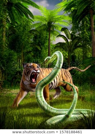 Vert python rendu blanche fond couleur Photo stock © Wampa