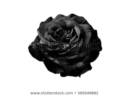 Zwarte rozen witte romantische bloemen Stockfoto © ElaK