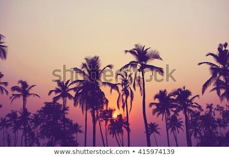 Belo mar pôr do sol folhas de palmeira primeiro plano céu Foto stock © Mikko