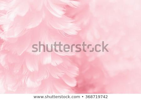 Gyönyörű lány ágy piros tollazat fektet fehér Stock fotó © zurijeta