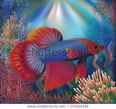 sualtı · tropikal · dünya · duvar · kağıdı · su · doğa - stok fotoğraf © carodi