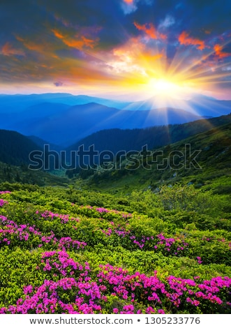 Dawn in the picturesque mountains covered with forests. stock photo © Serg64
