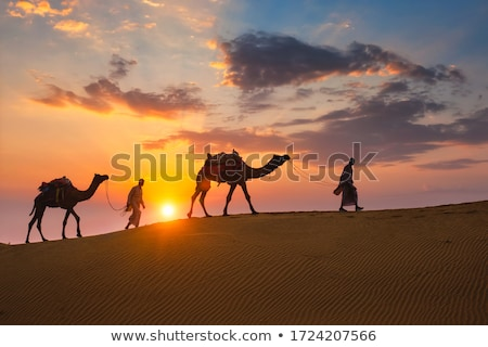 Caravan of camels at sunset 1 Stock photo © liolle
