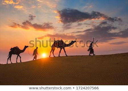 Karavan deve gün batımı siluetleri güneş siyah Stok fotoğraf © liolle