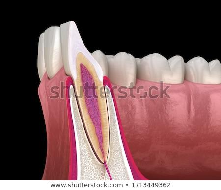 Dente seção transversal projeto abstrato azul médico Foto stock © Tefi
