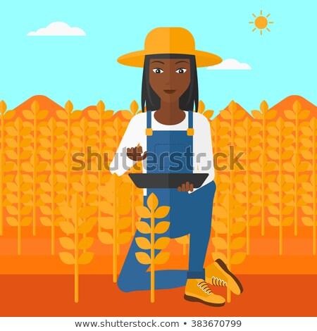 Femenino agricultor de trabajo maíz campo Foto stock © stevanovicigor