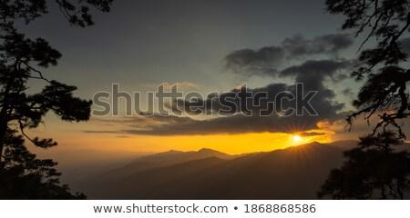 Piękna widoku żółty wzgórza światło słoneczne Zdjęcia stock © Leonidtit