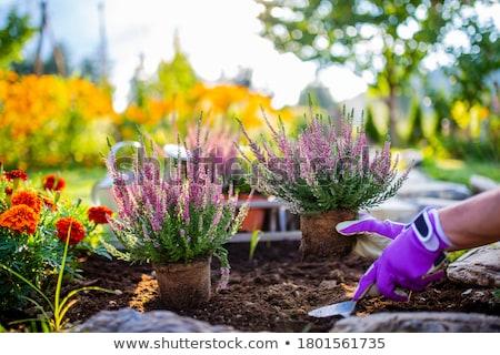 Sonbahar bahçıvanlık bahçe çalışma sonbahar sepet Stok fotoğraf © IS2