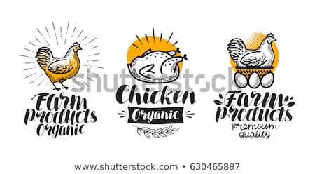 kakas · tipográfia · állat · tyúk · kreatív · grafikai · tervezés - stock fotó © lenm