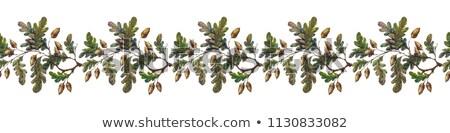 Autumn border with oak leaves Stock photo © kostins