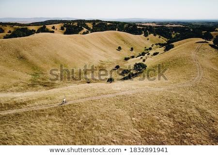 Hills Sérvia belo paisagem um verão Foto stock © boggy