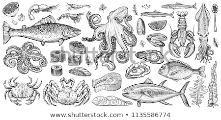 seafood set with mussel and crab engraved sketch stock photo © robuart