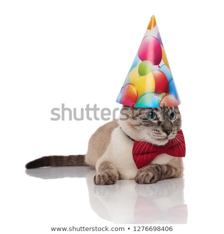 classy burmese cat with birthday hat looks to side Stock photo © feedough