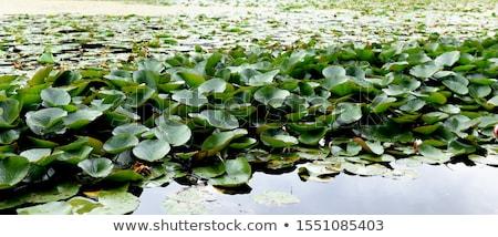 kertek · Írország · virágok · fák · utazás · növények - stock fotó © phbcz