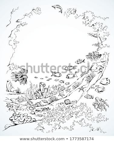 Zwarte lijn kunst zeester cartoon witte Stockfoto © cidepix