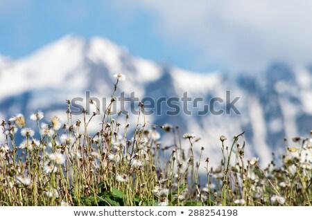 Montagna alpino montagna giostra circo Foto d'archivio © ShustrikS