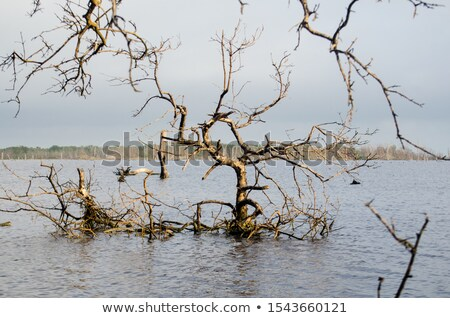árvore Colômbia raízes madeira floresta Foto stock © boggy