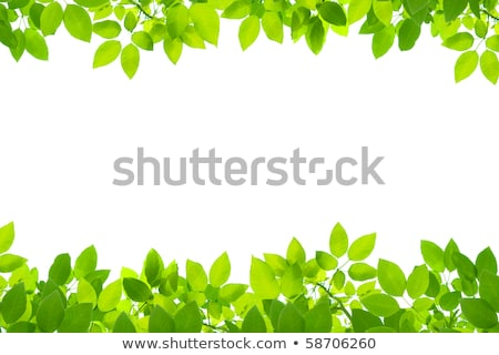 Green spring leaves in botanical garden on a sunny day, nature and environment Stock photo © Anneleven