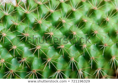 Detail cactus bloem abstract natuur Stockfoto © boggy
