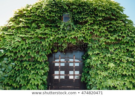 Lombhullató erdő fal otthon ház fű Stock fotó © ruslanshramko