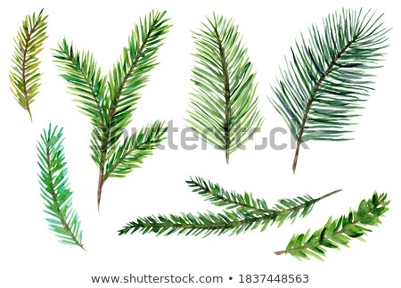 Green Conifer Branch Stock photo © newt96