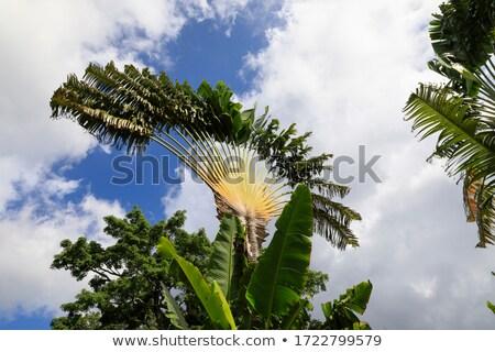 Wrażenie idylliczny dżungli dekoracje mały Karaibów Zdjęcia stock © prill