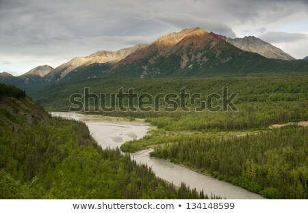 The Matanuska River cuts Through Woods at Chugach Mountains Base Stock photo © cboswell