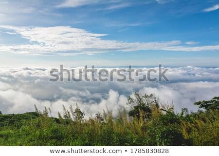 Avion au-dessus herbe ciel bleu Photo stock © Hofmeester