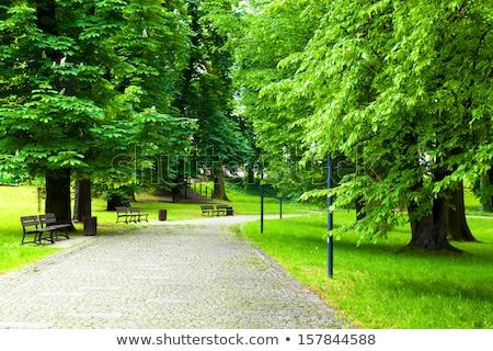 giardino · immagine · accogliente · albero · legno · natura - foto d'archivio © jonnysek