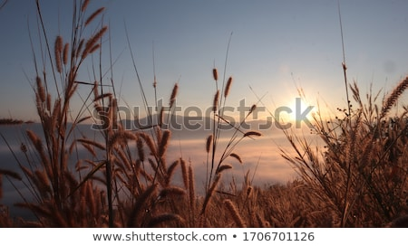 Névoa belo campos hills Foto stock © Discovod