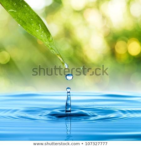 água · erva · daninha · padrão · textura · árvore · folha - foto stock © ryhor
