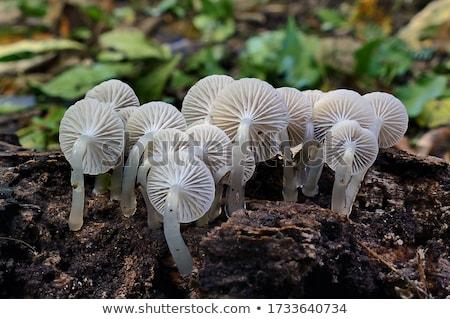 菌 森林 秋 葉 食品 夏 ストックフォト © compuinfoto