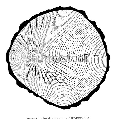 Old tree trunk background shaded circle. Stock photo © justinb