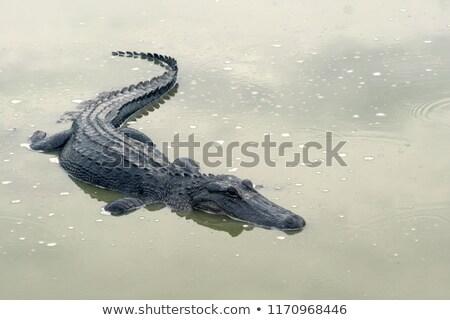 Krokodil tó víz szemek természet fogak Stock fotó © anan