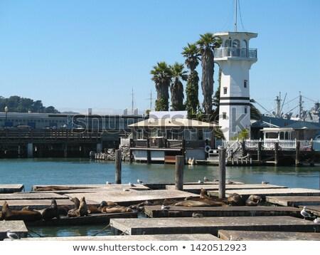 Vuurtoren pier San Francisco Californië USA huis Stockfoto © Frankljr