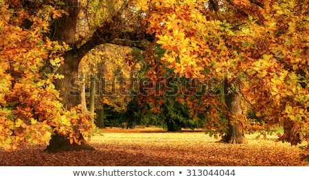 Colorful panorama of autumn, the magnificent scenery. Stock photo © lypnyk2