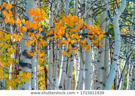 Fall Colors in the Sierra Mountains California Stock photo © tobkatrina