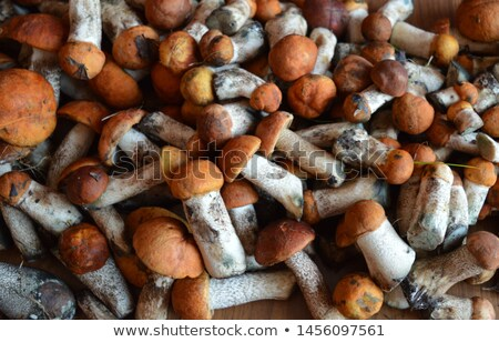 plenty of fresh mushrooms lying  Stock photo © OleksandrO