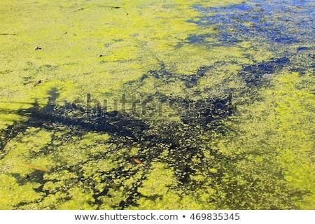 покрытый поверхности воды текстуры весны природы лист Сток-фото © art9858