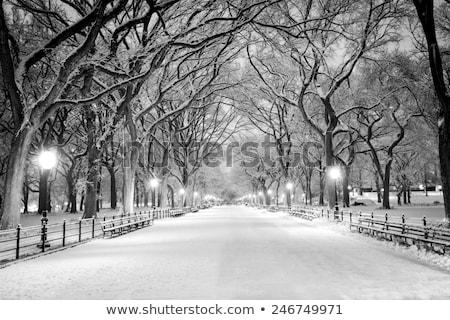 Sneeuw Central Park winter groot sneeuwstorm Stockfoto © rmbarricarte