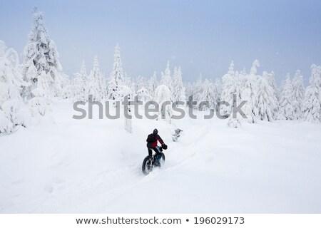 biker in winter, Orlicke Mountains, Czech Republic Stock photo © phbcz
