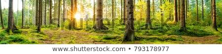 Bos landschap voorjaar gebroken boom zon Stockfoto © Kotenko