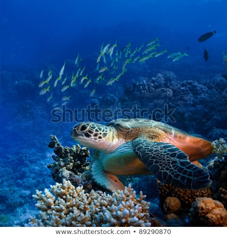 Tartaruga peixe natação subaquático ilustração fundo Foto stock © bluering