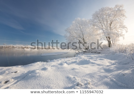Congelado lago nieve cubierto forestales frío Foto stock © Juhku