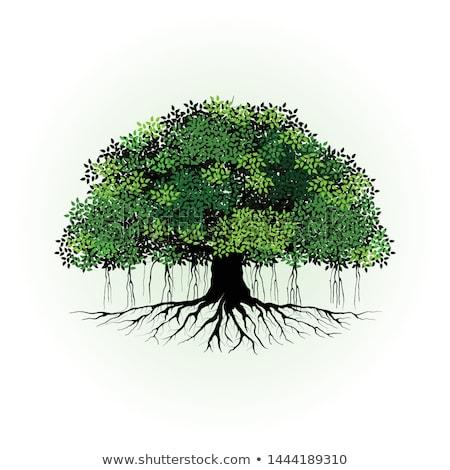 preto · árvore · raízes · isolado · branco · madeira - foto stock © iofoto
