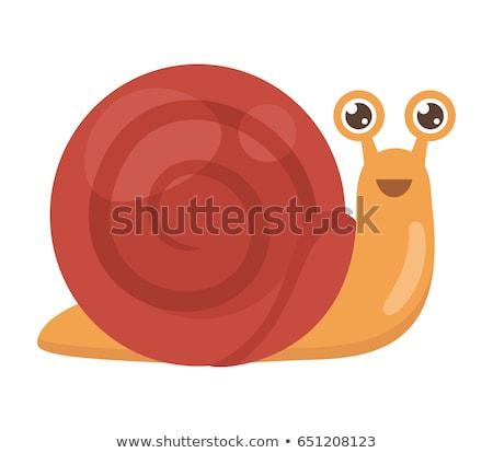 cheerful snail stock photo © derocz