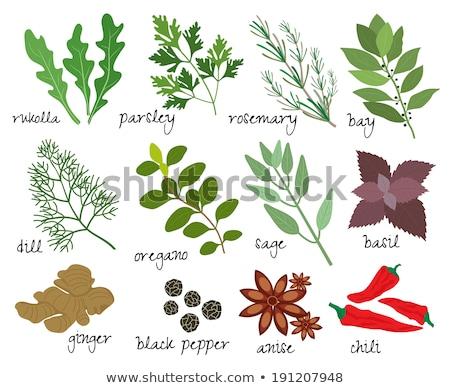 Stok fotoğraf: Taze · keklikotu · siyah · gıda · yeşil · yaprakları