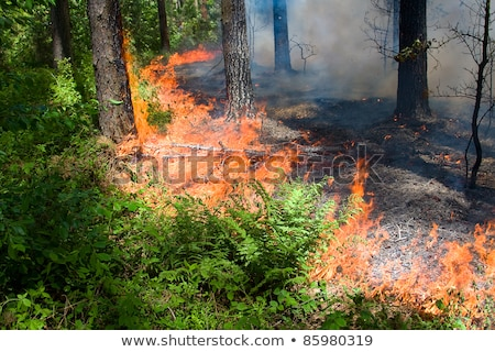 Fire in green grass Stock photo © simply