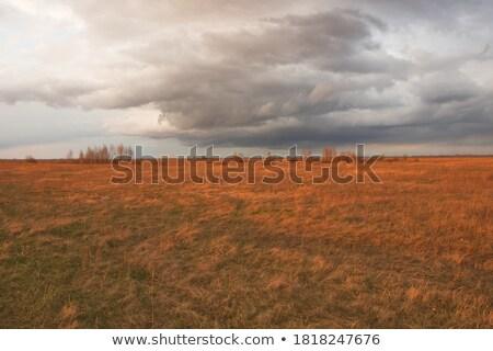 préri · tájkép · Saskatchewan · kék · ég · mező · fű - stock fotó © tasipas