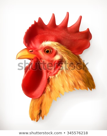 rooster head isolated on white background design element for lo stock photo © masay256
